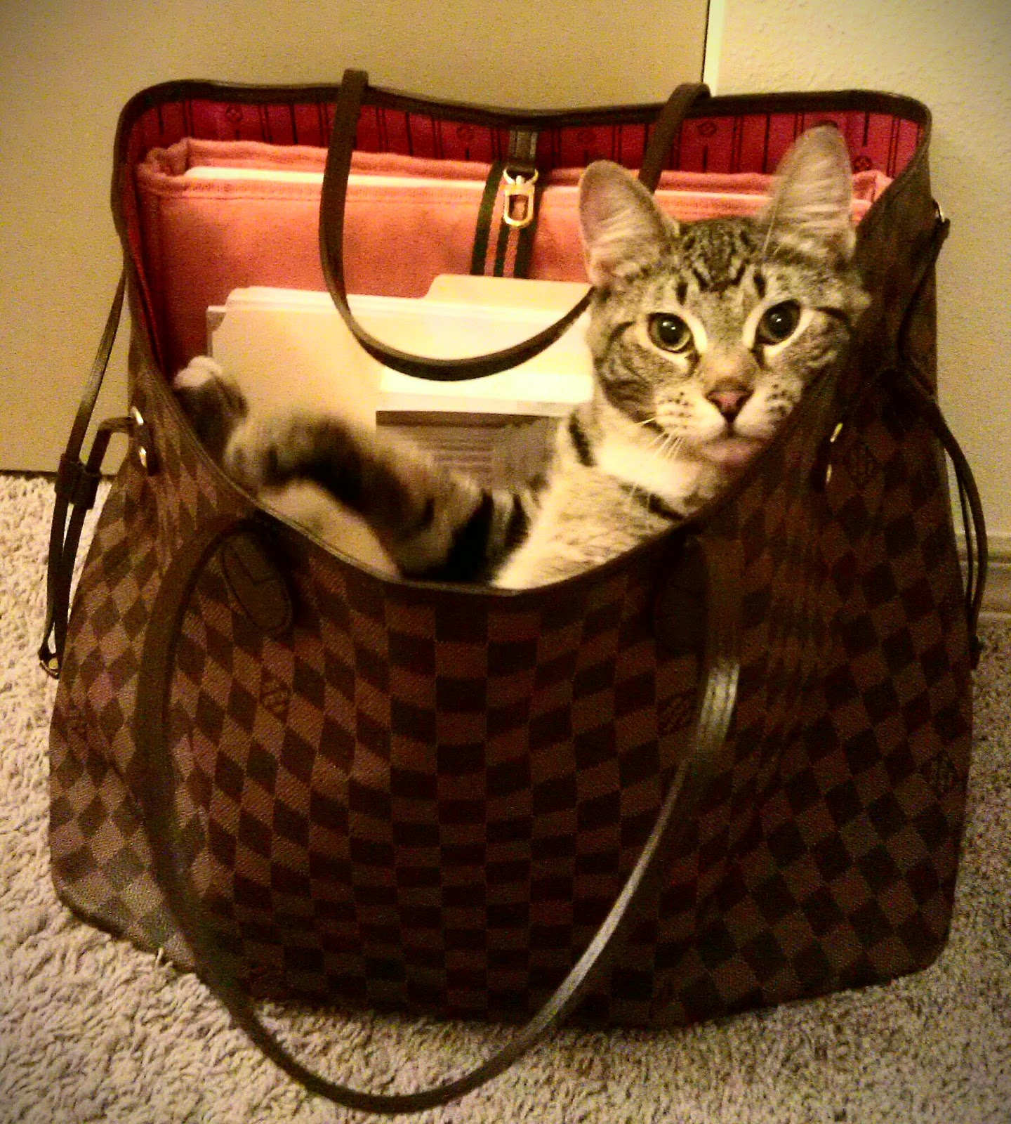 cat in a purse